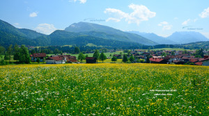 Urlaub in Reit im Winkl, Blumenwiese, Panoramablick