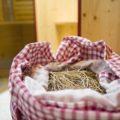 Heusackerl in kleines privaten Spa in Ferienwohnung Exklusiv in Reit im Winkl Neumaier