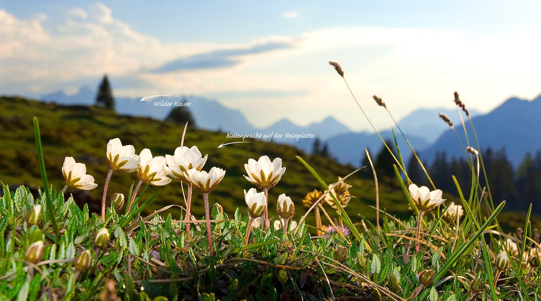 Blütenpracht auf der Steinplatte